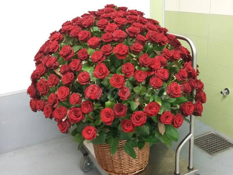 kvetinarstvi-praha-kos-s-240-cervenych-ruzi