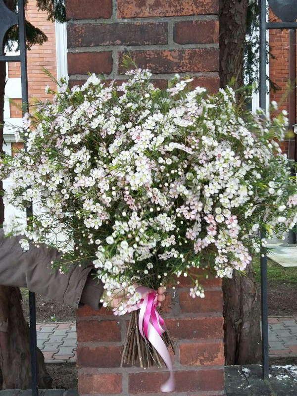 kvetiny-praha-rozvoz-kytic-chamelaucium
