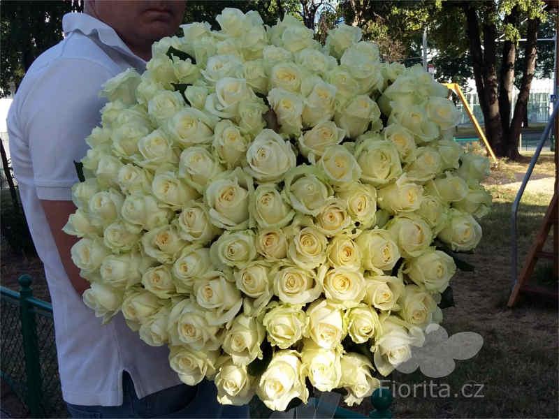 Růže, Roses, Розы, 100 bílých růží, 100white roses, 100 белых роз
