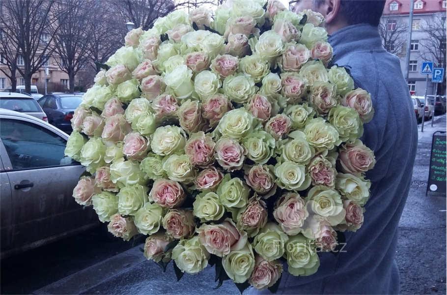 kytice-101-bila-ruzova-ruze-bouquet-101-white-pink-roses-101-belaya-rozovaya-roza