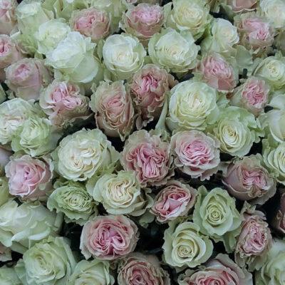 25 длинных белых роз
