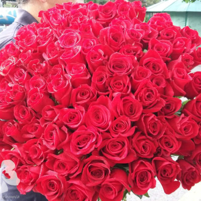A bouquet of 101 long red roses