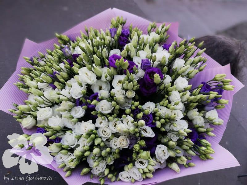 A bouquet of 50 eustomas